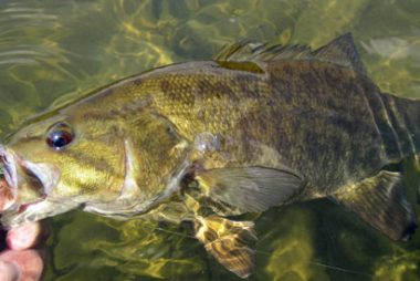 Fly Fishing for Smallmouth Bass in South Central Pennsylvania